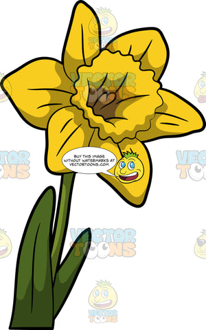A Gorgeous Blossom Of A Daffodil Flower