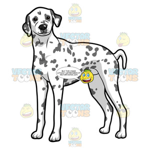 An Adult Dog With Spots Standing Tall And Alert