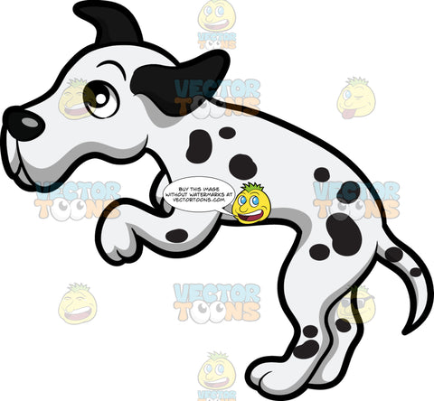A Leaping Dalmatian Puppy