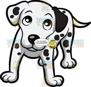 A Lovely Dalmatian Puppy Looking Up At Its Owner