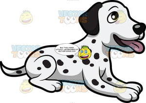 An Attentive And Cool Dalmatian Puppy
