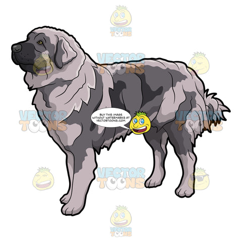 A Furry Gray Mountain Dog
