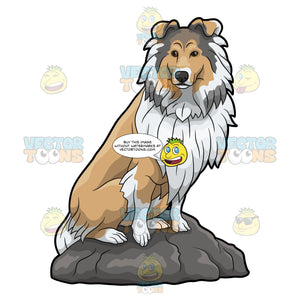 A Proud Looking Collie Sitting On A Rock