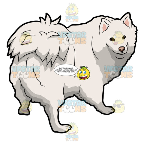 An Adorable Samoyed Dog