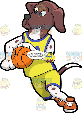 A Dog Playing Basketball. A dog with brown and white spotted coat, droopy ears, wearing a yellow with purple sleeveless jersey, orange with white sneakers, fakes and runs while dribbling an orange basketball