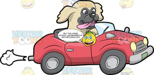 A Dog Driving A Car. A small dog with beige coat, gray face, parts its mouth to reveal a pink tongue, while driving a red convertible car