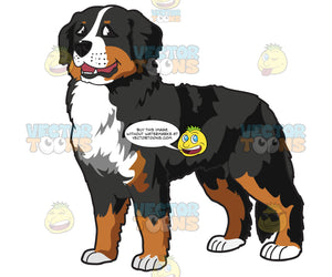 A Very Nice Bernese Mountain Dog