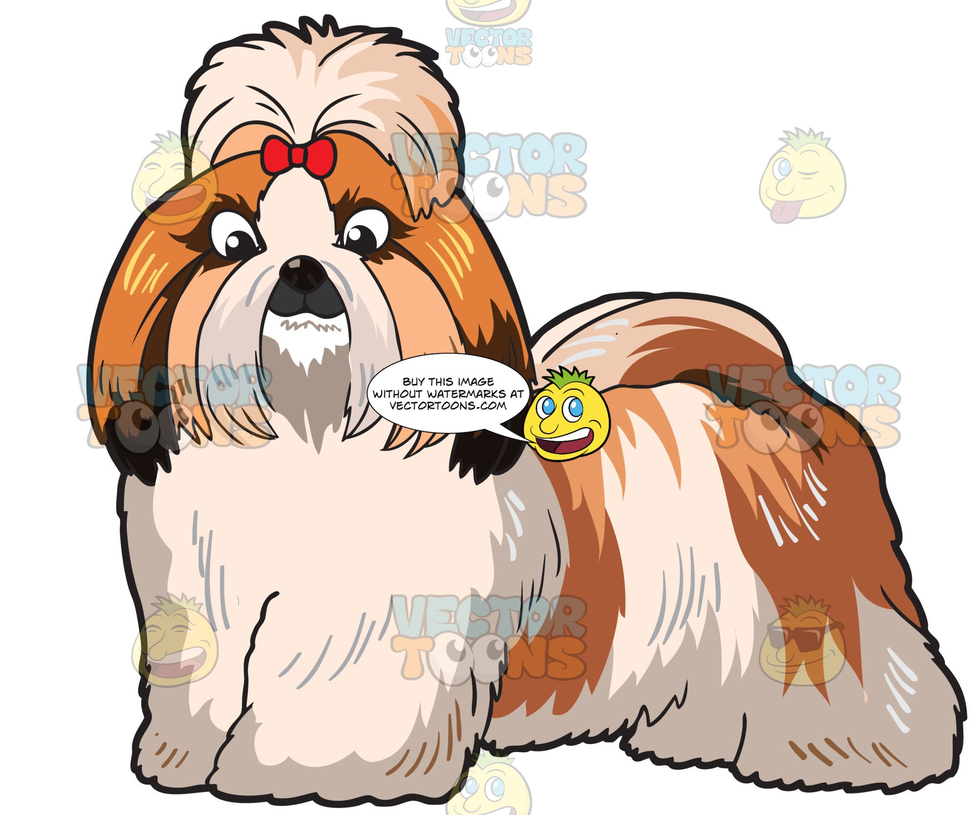 A Very Lovely Shih Tzu