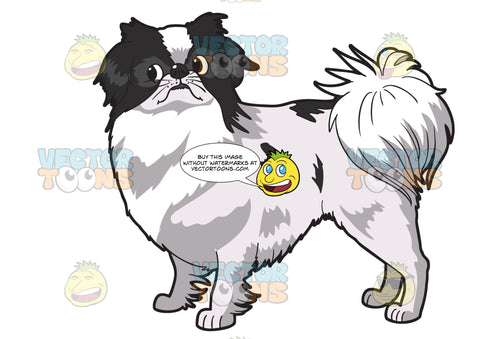 A Cute Japanese Chin