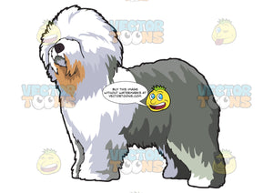 A Fluffy Old English Sheepdog