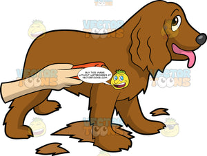 A Dog Being Groomed Using A Fur Trimmer. A dog with droopy ears, pink tongue wagging out, smiles as a hand is trimming its long brown coat using an orange shaver