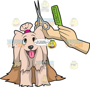 A Cute Terrier Having Its Fur Trimmed. A cute dog with a two tone brown coat, pink tongue, ponytail, smiles as a pair of hands trims its coat using a pair of scissors and green comb