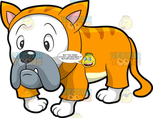 A Sad Dog In A Cat Costume. A sad dog with white coat, gray muzzle, lone protruding tooth, wearing an orange cat costume with faint stripes