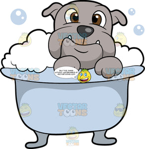 A Nice Bulldog Getting A Bath. A gray dog with a dark gray nose, two white sharp teeth coming out of its mouth, smiles while taking a bubble bath inside a light bluish gray bathtub