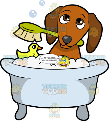 A Shy Dog Taking A Bath. A shy looking dog with droopy ears and brown coat, dark nose, dips inside a light bluish tub filled with bubble bath together with a yellow rubber duckie, as he bites on an apple green bath brush