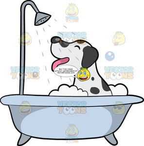 Dalmatian Dog Taking A Bath. A cute dog with white coat and black spots, droopy ears, shuts its eyes and wags his pink tongue while taking a shower and a bubble bath inside a light bluish gray tub