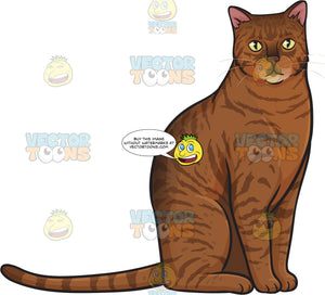 A Striped Brown And Orange Domestic Cat