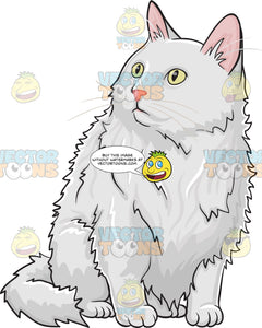 A Fluffy White Domestic Cat