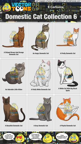 Domestic Cat Collection 6