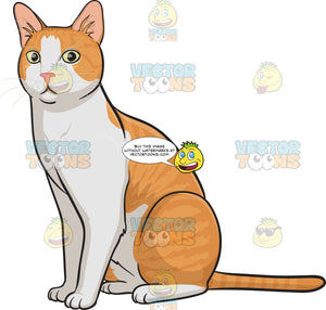 An orange and white house cat