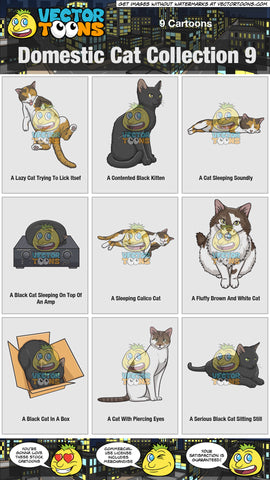 Domestic Cat Collection 9