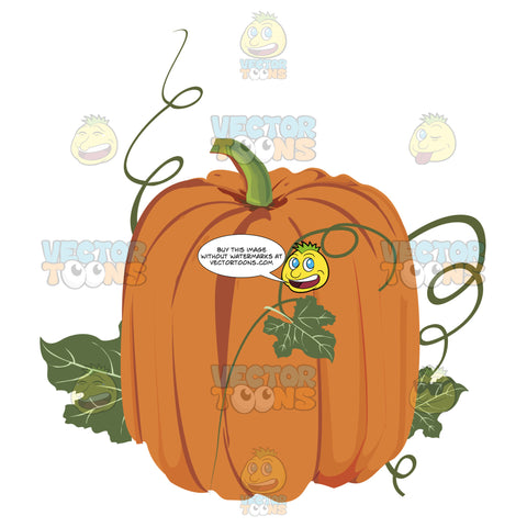 Tall Elongated Orange Pumpkin With Green Stem And Vines