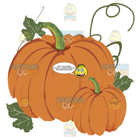 Orange Large And Small Pumpkin Together Surrounded By Green Vines