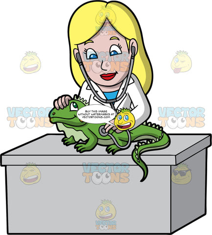 A Female Veterinary Doctor Examining A Pet Iguana. A female veterinarian with blonde hair, wearing a blue blouse inside a white coat, stands behind a gray desk as she checks up a green iguana with a stethoscope