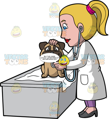 A Female Veterinary Doctor Examining A Happy Dog. A female veterinarian with ponytailed blonde hair, wearing a white coat, purple pants, dark gray heels, smiles while listening to the heartbeat of a cute little dog with two tone brown coat, sitting on top of a gray desk with a white cloth, using a light blue stethoscope