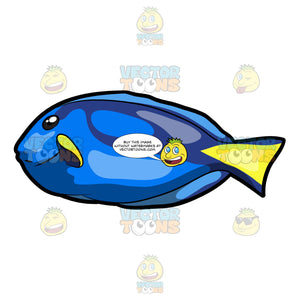 A Striking Royal Blue Tang Fish