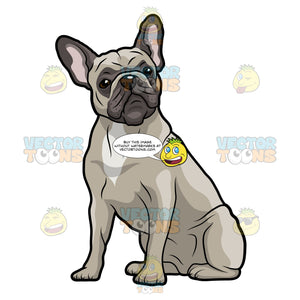 Grey French Bulldog Sitting And Looking Forward