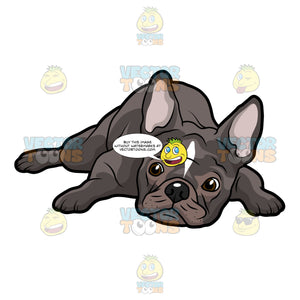 French Bulldog Lying Down With Its Head On The Floor