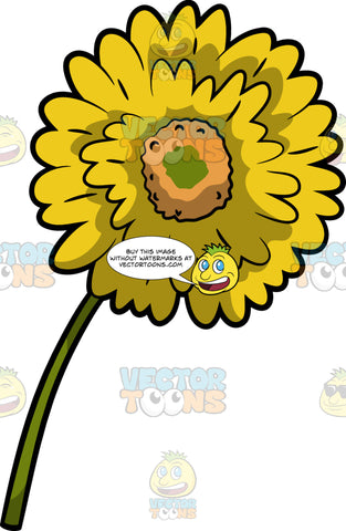 A Yellow Gerbera Daisy Flower