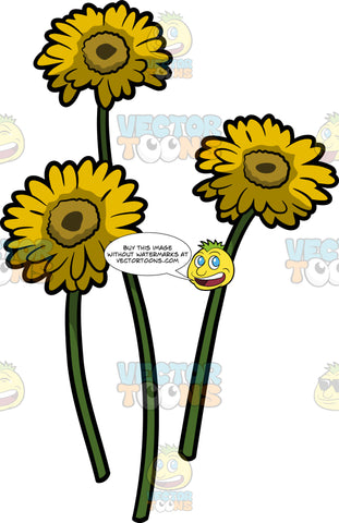 Three Bright Yellow Daisies
