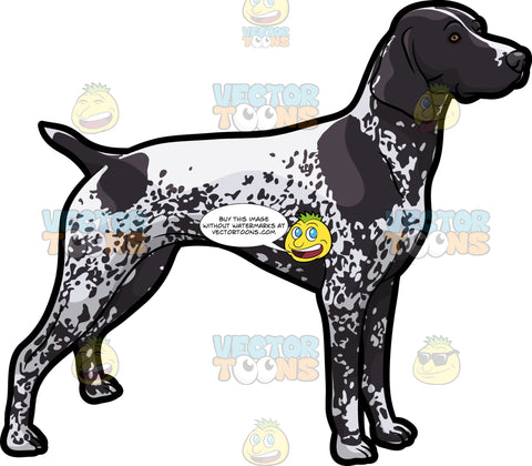 An Observant German Shorthaired Pointer Pet Dog