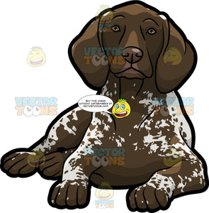 A Resting German Shorthaired Pointer Pet Dog