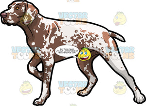 A German Shorthaired Pointer Pet Dog