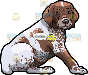 A Cute German Shorthaired Pointer Pet Dog