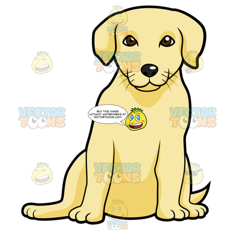 Golden Labrador Puppy Sitting