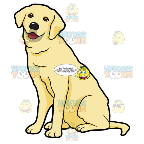 Side View Of A Yellow Labrador Sitting