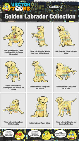 Golden Labrador Collection