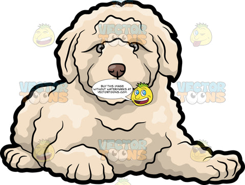 A Quiet And Resting Golden Doodle Dog