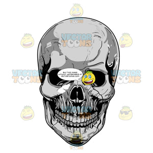Full And Complete Human Skull With Grey Metal Sheen