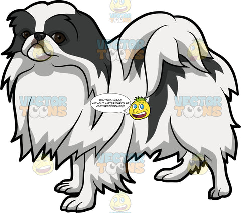 A Japanese Chin Dog
