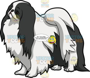 A Sad Japanese Chin Dog