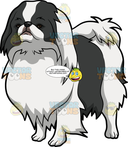 An Attentive Japanese Chin Dog
