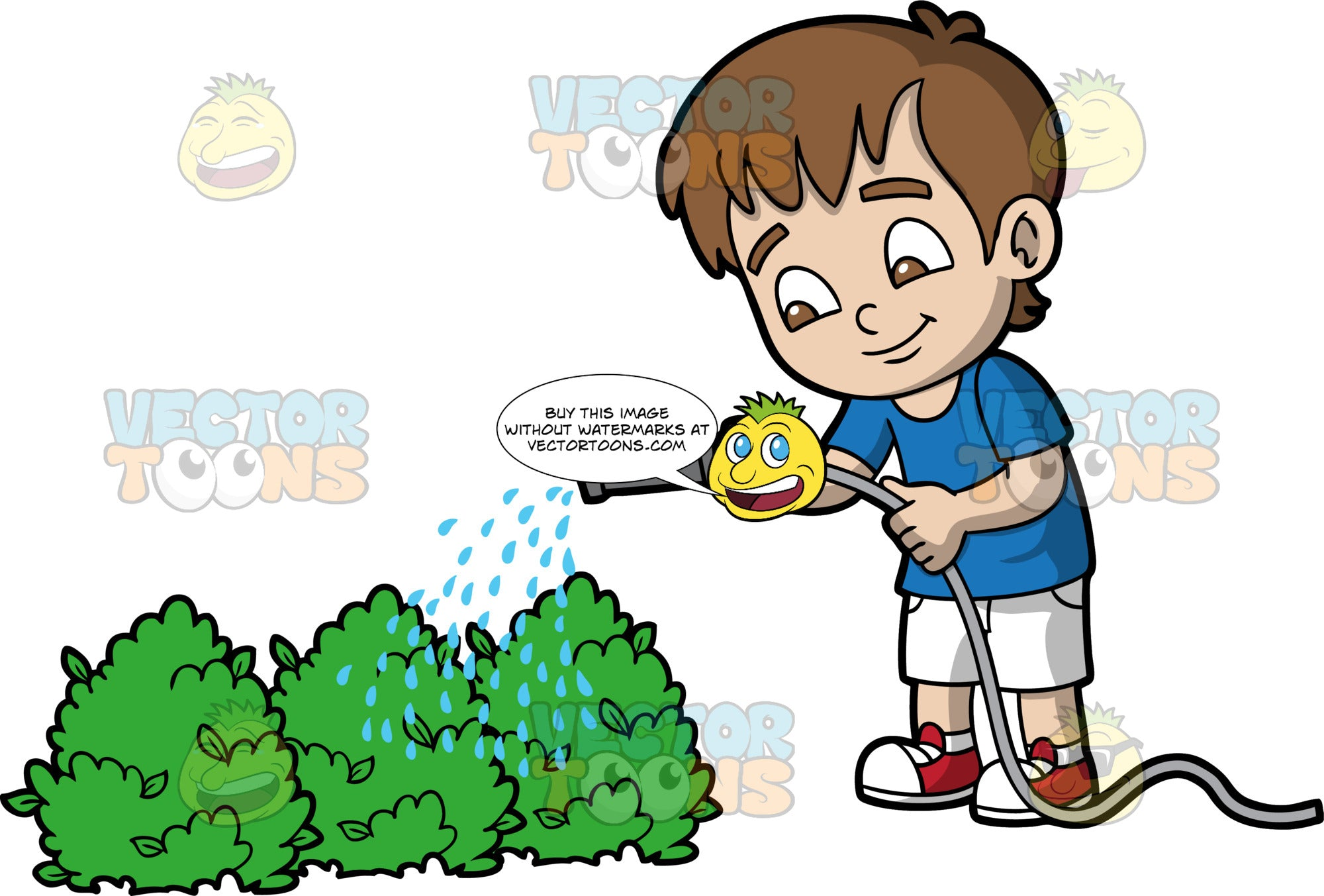 A young boy watering some bushes. A boy with brown hair and eyes, wearing white shorts, a blue shirt, and red and white sneakers, using a hose to water some bushes outside