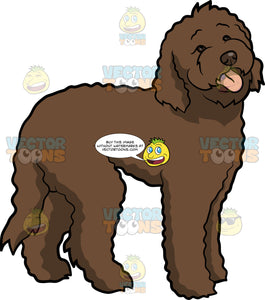 A Cute Labradoodle Dog