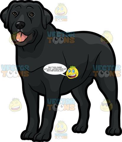 A Beautiful Black Labrador Pet Dog