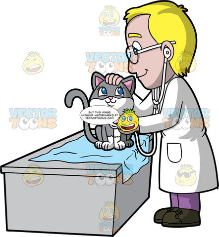 A Male Veterinary Doctor Inspects The Breathing Of A Female Cat. A male veterinarian with blonde hair, wearing a white coat, purple pants, black shoes, eyeglasses, smiles while standing beside a gray desk with a light blue mat, to inspect the breathing of a smiling cat with gray and white coat, using a white stethoscope